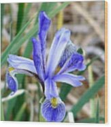 Wild Iris At South Fork Wood Print