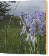 Wild Iris II Wood Print