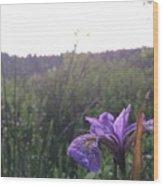 Wild Iris Wood Print