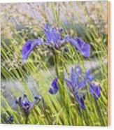 Wild Irises Wood Print by Marty Saccone