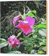 Wild Irish Rose Wood Print