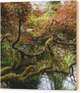Wild Japanese Maple Wood Print