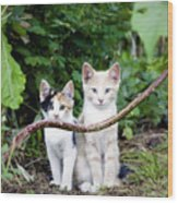 Wild Kats Wood Print