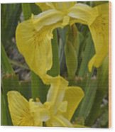 Wild Lilly Wood Print