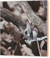 Wild Lily Wood Print