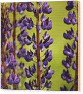 Wild Lupine Wood Print