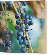 Wild Michigan Grapes Wood Print