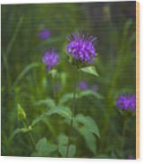 Wild Monarda Wood Print by Barbara Schultheis