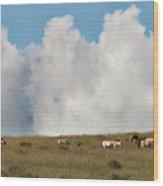 Wild Mongolian Horses Wood Print
