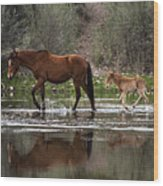 Wild Mother And Foal Horses Walk In The Salt River  Wood Print