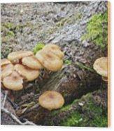 Wild Mushrooms 2 Wood Print