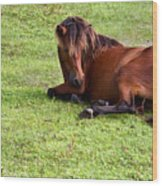 Wild Mustang At Rest Wood Print