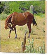 Wild Mustang Wood Print