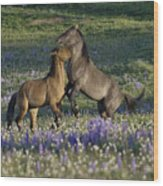 Wild Mustangs Playing 2 Wood Print