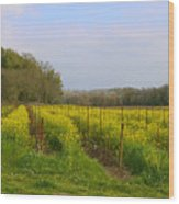 Wild Mustard Fields Wood Print