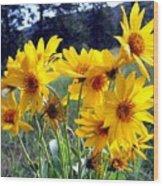 Wild Okanagan Sunflowers Wood Print