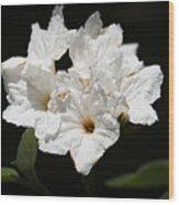 Wild Olive Tree Bloom Wood Print