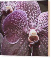 Wild Orchid 1 Wood Print