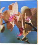 Wild Orchid Wood Print