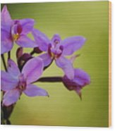 Wild Orchids 2 Wood Print