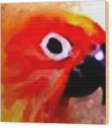 Wild Parrot Wood Print