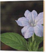 Wild Petunia Wood Print