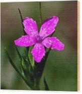 Wild Pink Wood Print