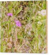 Wild Pink Dianthus Wood Print