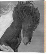Wild Pinto Stallion Wood Print