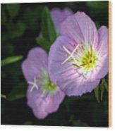 Wild Primrose Wood Print