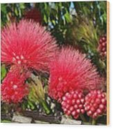 Wild, Red Fluffy Flowers  Wood Print