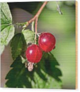 Wild Red Goosberries Wood Print