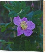 Wild Rose 1 Wood Print