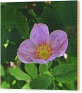 Wild Rose 4 Wood Print