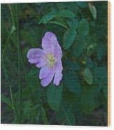 Wild Rose 6 Wood Print