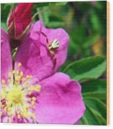 Wild Rose And The Spider Wood Print