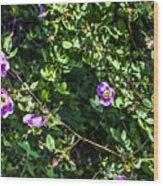 Wild Rose Habitat Wood Print