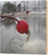 Wild Rose Hip On Mississippi River Bank Wood Print