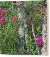 Wild Rose In Sumac Wood Print