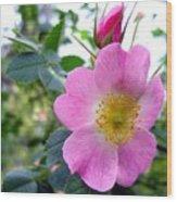 Wild Roses 2 Wood Print