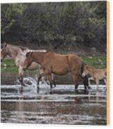 Wild Salt River Horses River Walk Wood Print