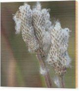 Wild Seed Wood Print