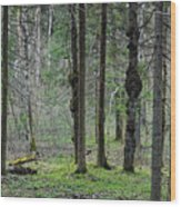 Wild Spring Forest Wood Print