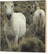 Wild Stallion Wood Print
