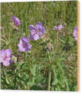 Wild Sticky Geranium Wood Print