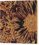 Wild Sunflower Abstract Wood Print