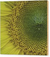 Wild Sunflower Wood Print