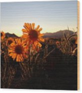 Wild Sunflowers Of Buena Vista Wood Print