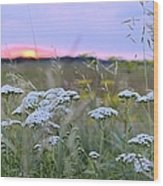 Wild Sunrise Wood Print