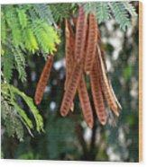 Wild Tamarind Wood Print